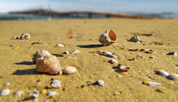 Рапаны Черного моря