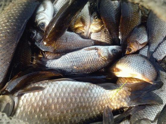 Охотничье-рыболовная база Ордынка, Темрюк - Охота и
