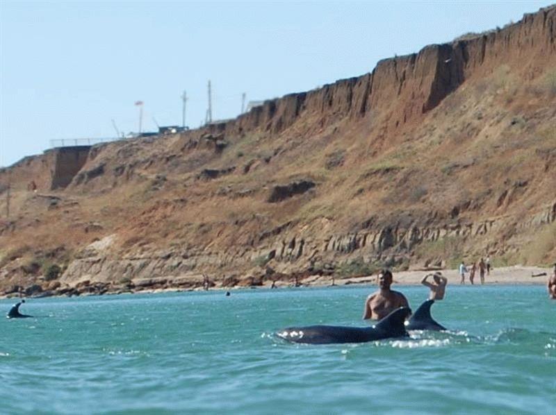 красивое, пляж волна темрюк фото дельфины для создания