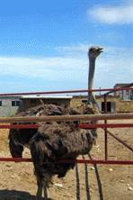 Отдых и туризм в Керчи