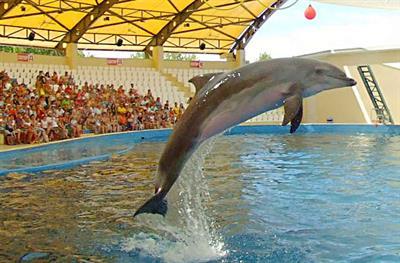 Анапский дельфинарий «Немо» на Пионерском проспекте