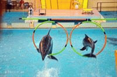 Геленджикский дельфинарий и его звезды