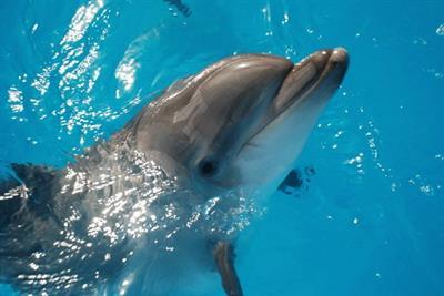 Дельфинарий в Новороссийске