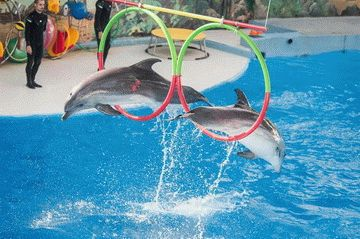Большой Сочинский Дельфинарий в парке «Ривьера»