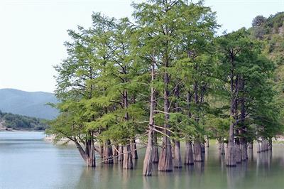 Деревья в Анапе — Какие деревья растут на курорте