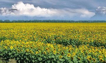 Краснодарский край — Описание южного региона России