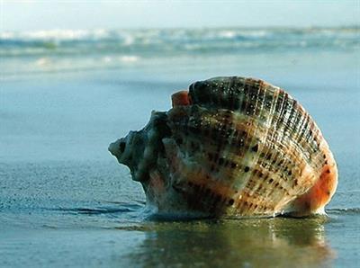 Морские моллюски