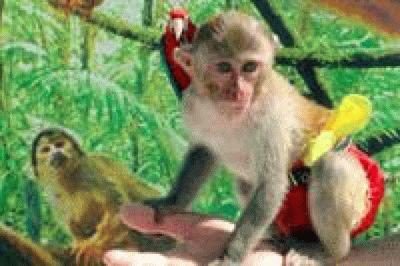 «Планета обезьян» в Голубицкой