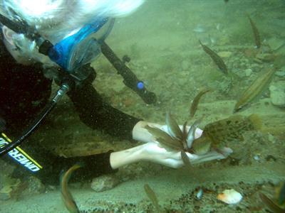 Подводная экскурсия в Анапе