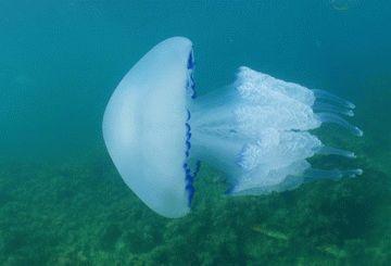 Подводный мир Анапы
