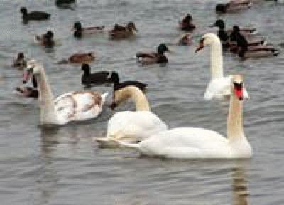 Птицы на Кубани