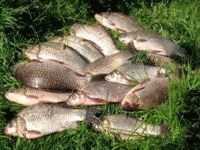 Пересыпь - рыбалка