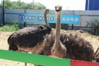 Парк птиц в Голубицкой