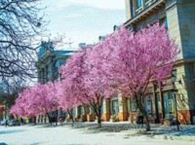 Симферополь весной