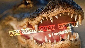 Видео крокодиловой фермы в Голубицкой
