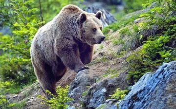 Животные Краснодарского края