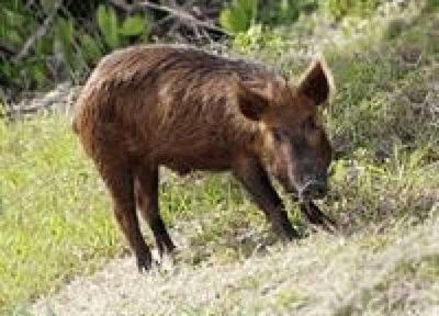 Животные Кубани
