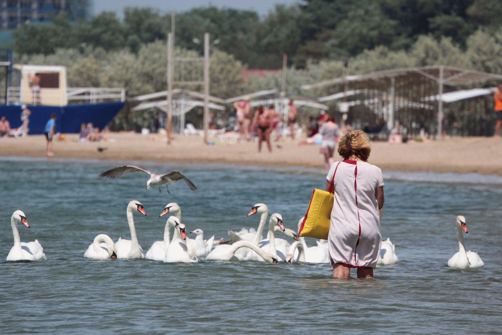 Отдых на черноморском курорте