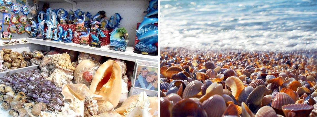Морские ракушки на память о курорте