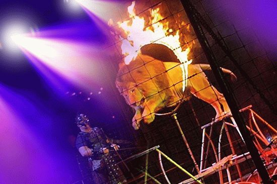 Цирки на курорте Анапа