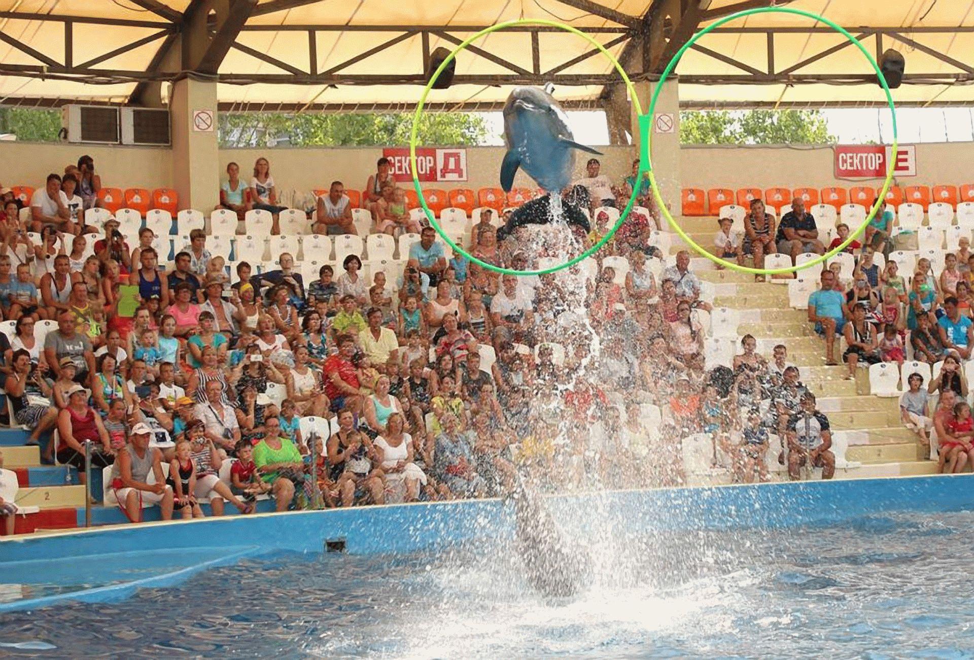 Прыжки артистов дельфинария