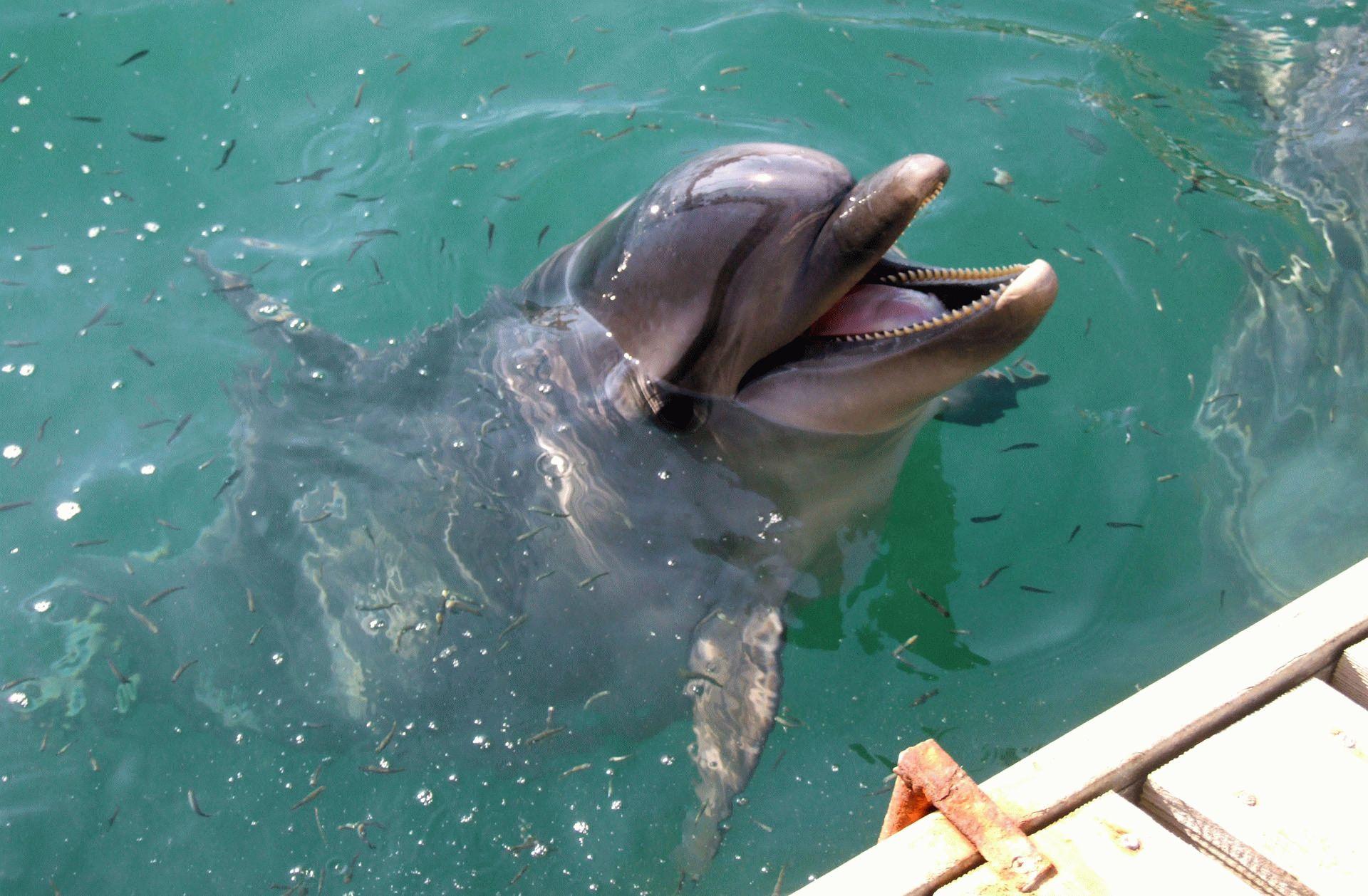 Дельфин в Утришском дельфинарии