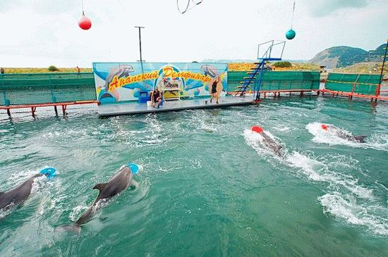 Дельфинарий в Анапе на Большом Утрише
