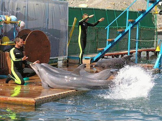 Утришский дельфинарий