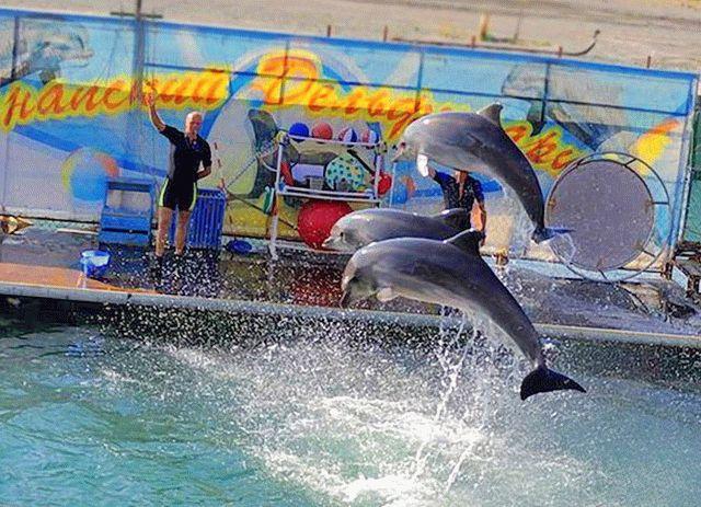 Дельфинарий на Большом Утрише с естественной средой обитания
