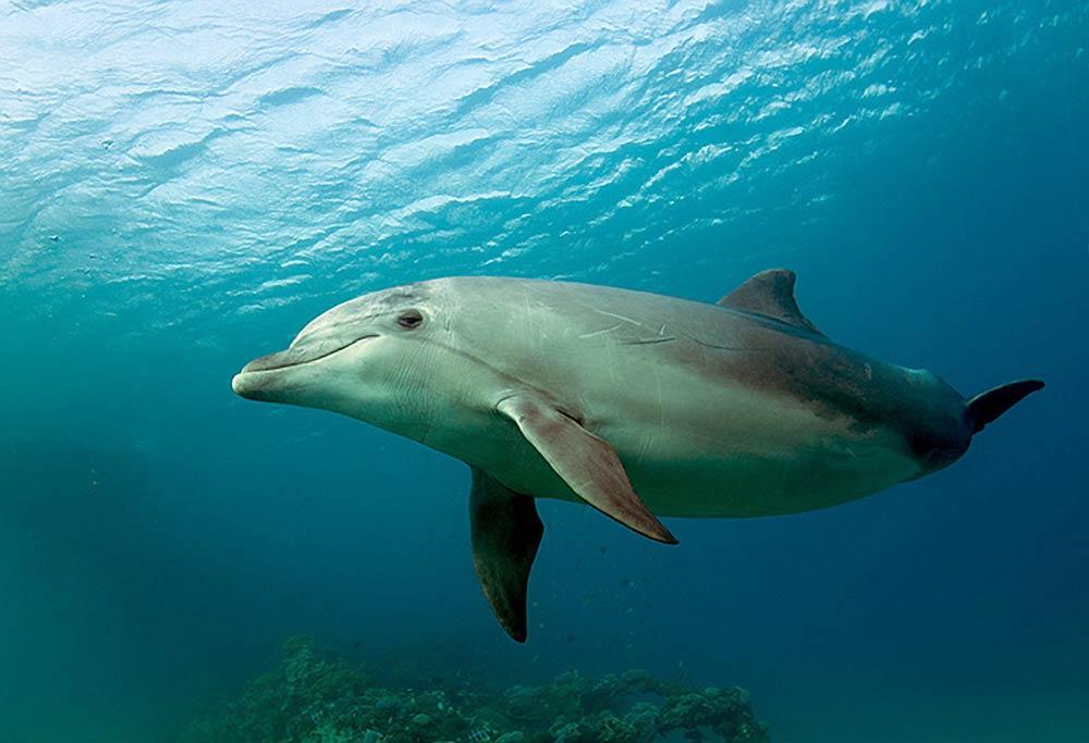 Черноморские дельфины у берегов Анапы