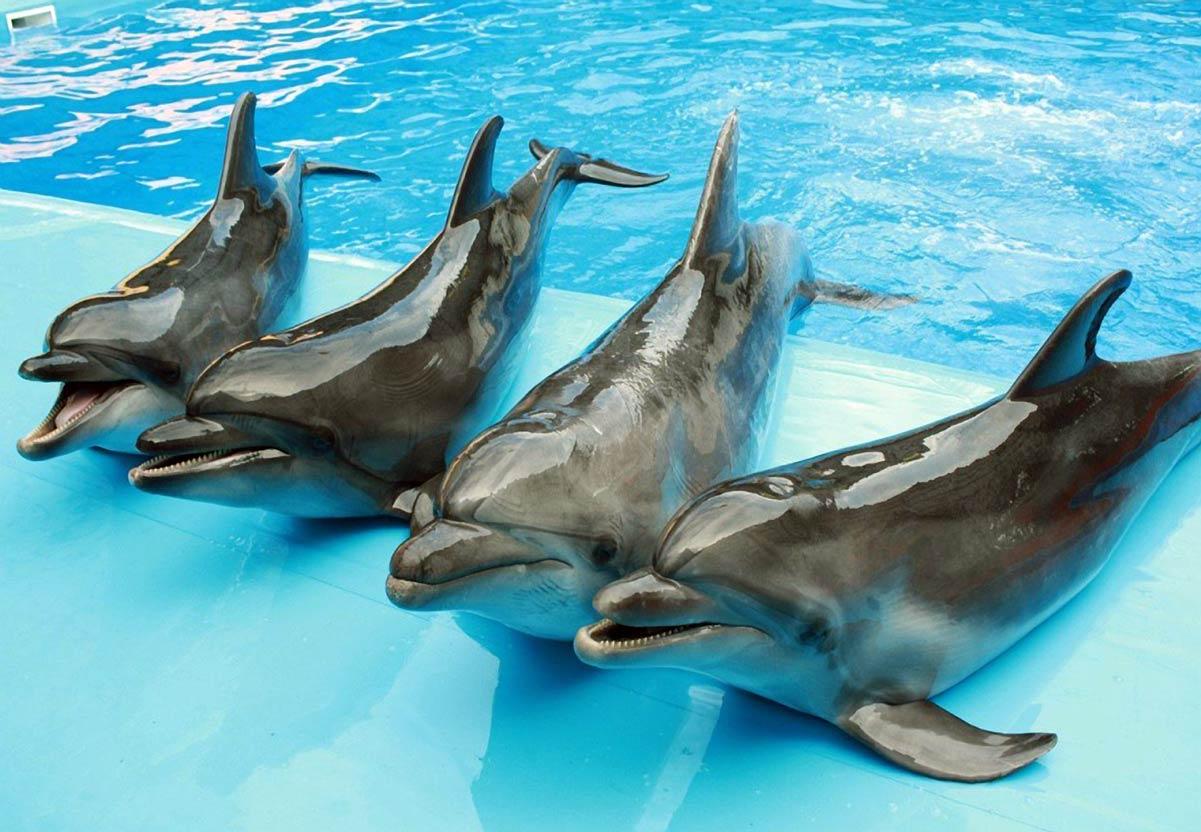 Дельфины - актеры
