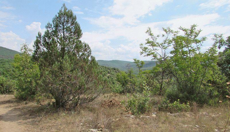 Деревья на курорте Анапа