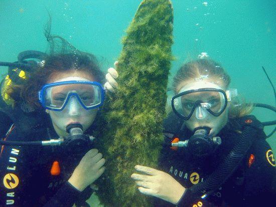 Погружения с аквалангом в Анапе