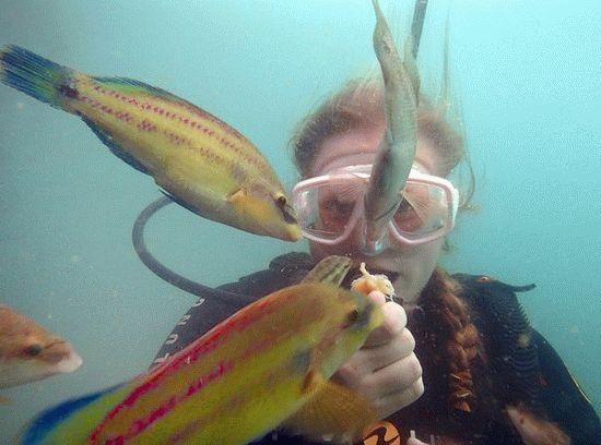 Погружения с аквалангом на курорте Анапа