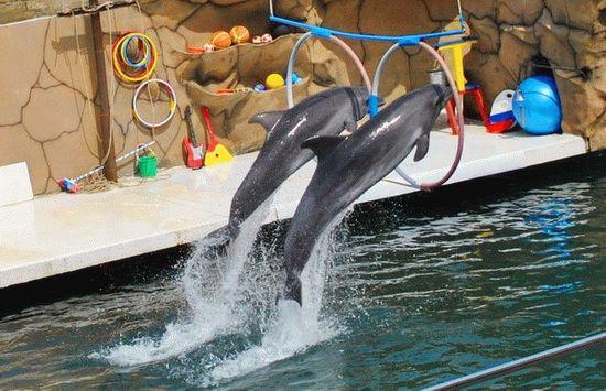 Дельфинарий на Утрише в морской среде