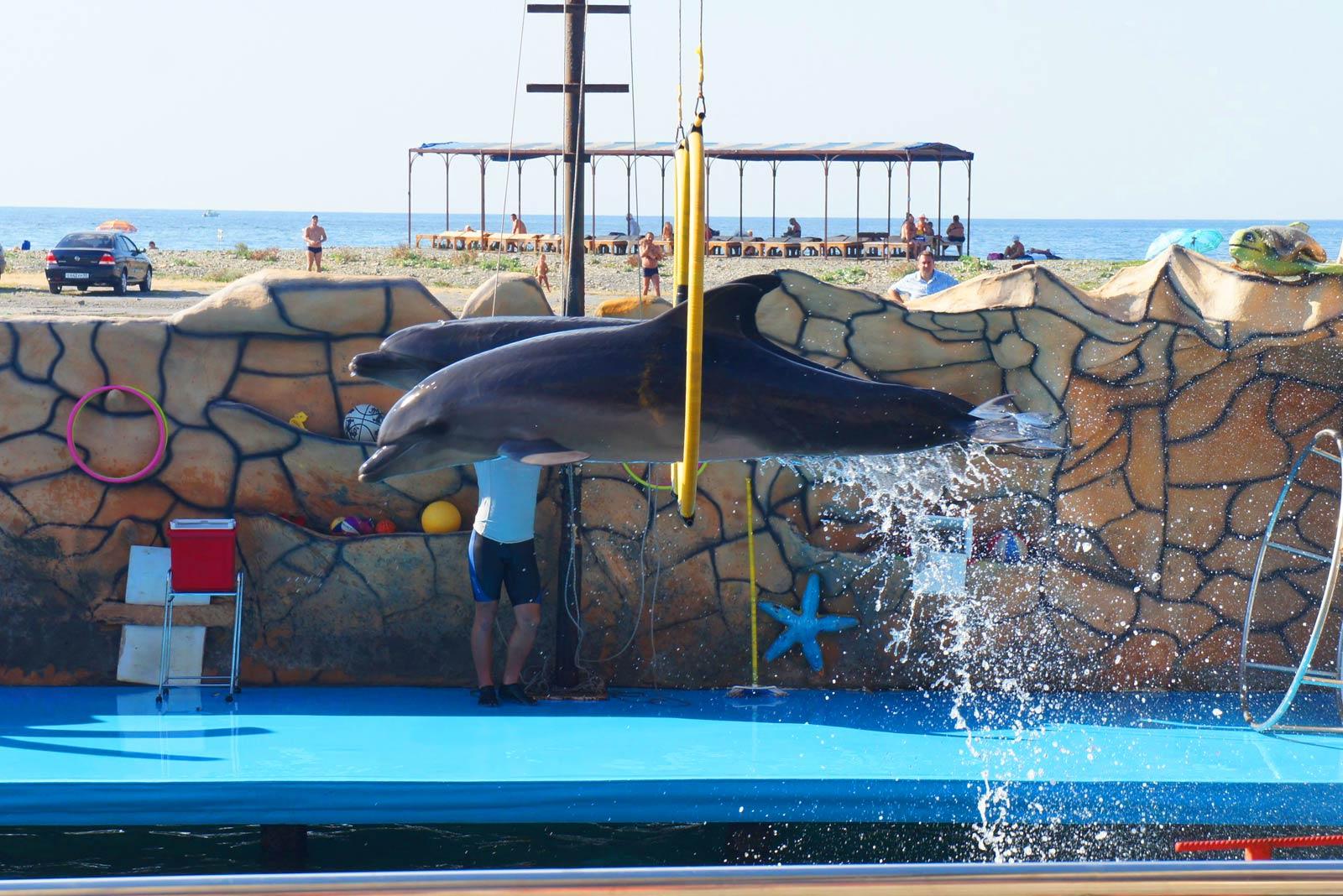 Экскурсия в дельфинарий на Большой Утриш