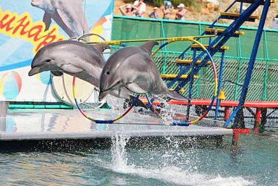Дельфинарий на Черном море в Анапе