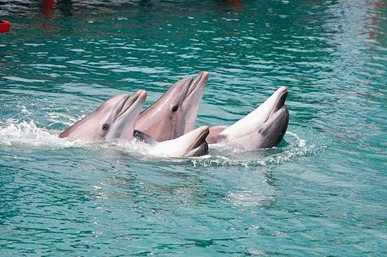 Дельфинарий на Черном море - Большой Утриш