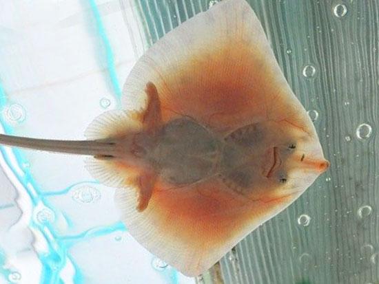 Морской аквариум в Анапе