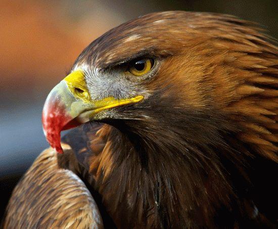 Орел клевал Прометея