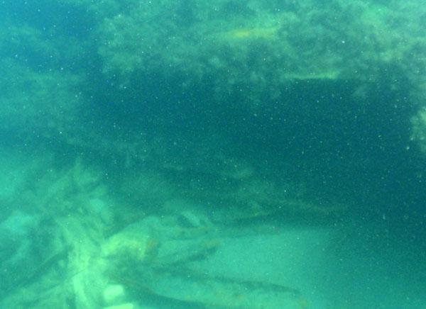 Неизвестное затонувшее судно