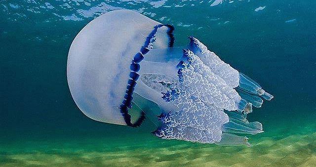 Медуза жалит щупальцами