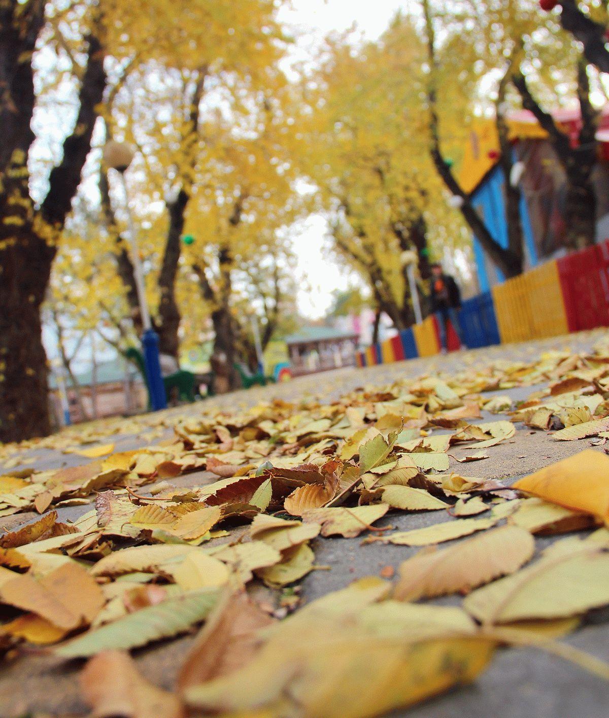Осенние красоты