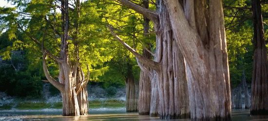 Озеро Сукко с кипарисами