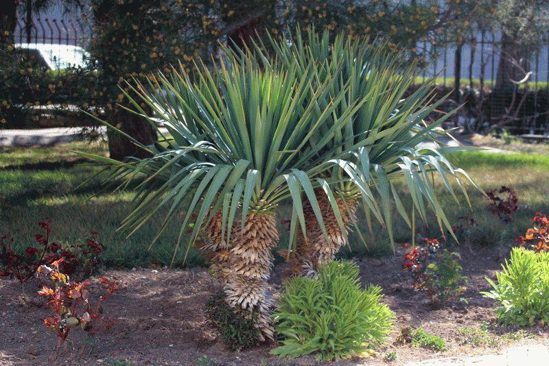 Пальмы на территории санатория Родник