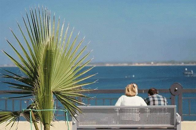 Пальмы на набережной курорта