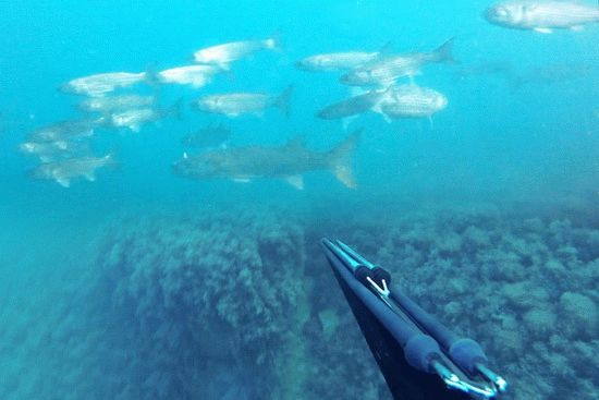 Подводная охота на курорте Анапа