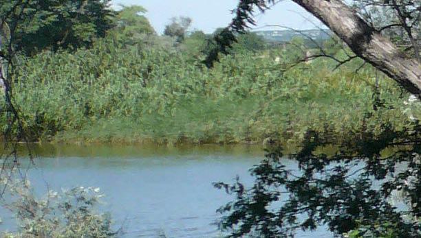 Озеро в поселке Пятихатки