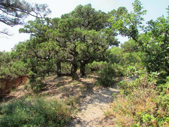 Доклад растительность краснодарского края 4996