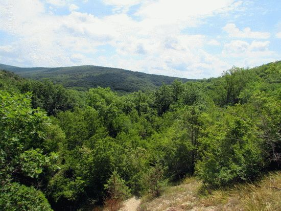 Покрытые растительностью склоны гор Кубани